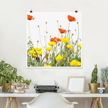 Poster - Wild Flowers - Quadrat 1:1