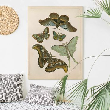 Leinwandbild - Vintage Illustration Exotische Schmetterlinge II - Hochformat 4:3