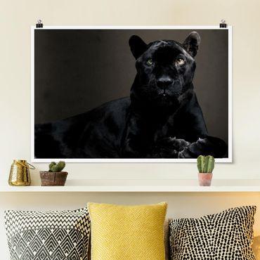 Poster - Black Puma - Querformat 2:3