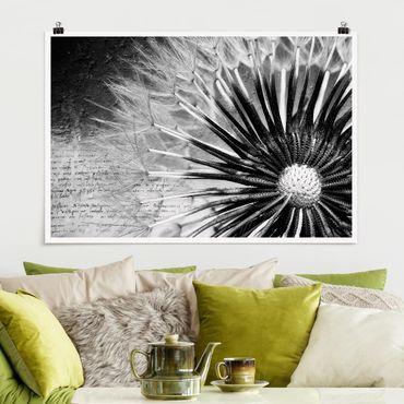 Poster - Pusteblume Schwarz & Weiß - Querformat 2:3