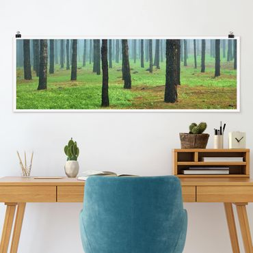 Poster - Tiefer Wald mit Kiefern auf La Palma - Panorama Querformat