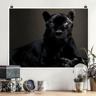 Poster - Black Puma - Querformat 3:4