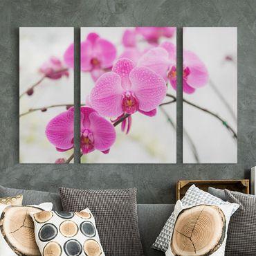 Leinwandbild 3-teilig - Nahaufnahme Orchidee - Triptychon