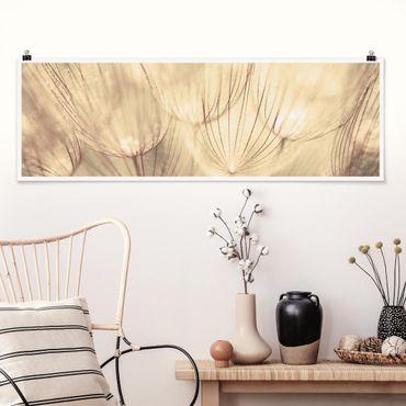 Poster - Pusteblumen Nahaufnahme in wohnlicher Sepia Tönung - Panorama Querformat