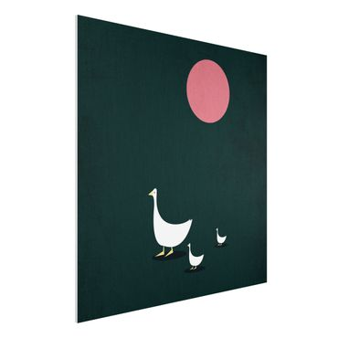 Forex Fine Art Print - Familie Gans auf Wanderschaft - Quadrat 1:1