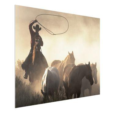 Forexbild - Cowboy Silhouette