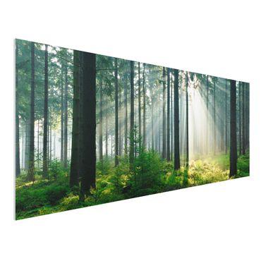 Forexbild - Enlightened Forest