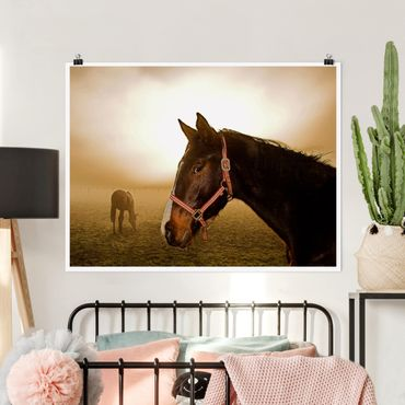 Poster - Early Horse - Querformat 3:4