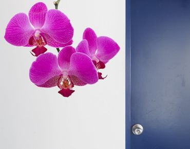 Wandtattoo Orchidee No.175 Orchidee Pink
