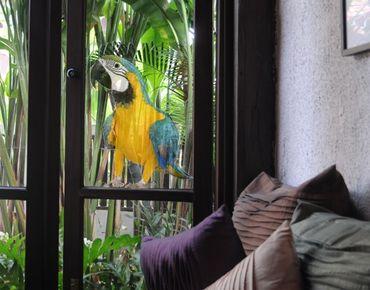 Fensterfolie - Fenstersticker No.134 Ara - Fensterbilder