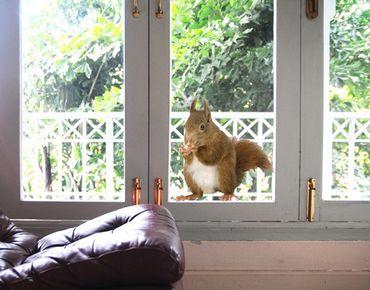 Fensterfolie - Fenstersticker No.137 Eichhörnchen - Fensterbilder