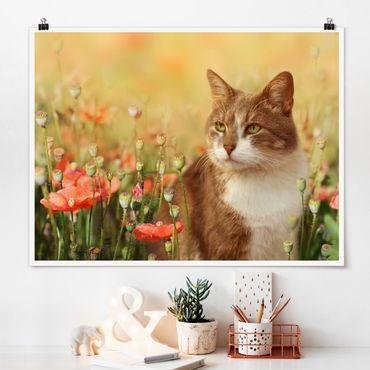 Poster - Katze im Mohnfeld - Querformat 3:4