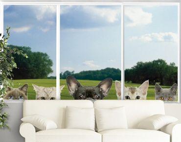 Fensterfolie - Fenstersticker No.273 Katzen mit Hundeblick - Fensterbilder