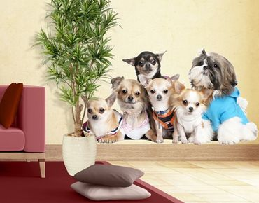Wandtattoo Hund No.277 Chihuahuas and a Shi
