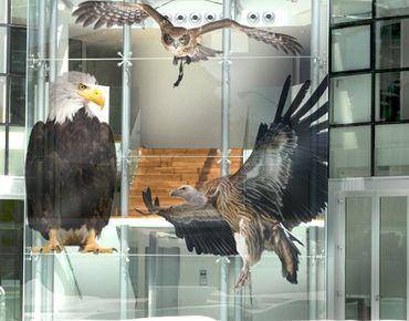 Fensterfolie - Fenstersticker No.380 Rapacious Birds Set - Fensterbilder
