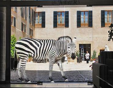 Fensterfolie - Fenstersticker No.388 Scheues Zebra - Fensterbilder