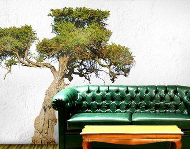 Wandtattoo Baum No.394 Olivenbaum
