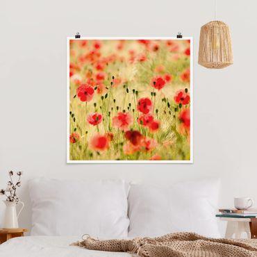 Poster - Summer Poppies - Quadrat 1:1