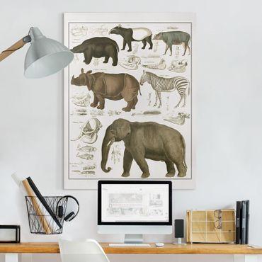 Leinwandbild - Vintage Lehrtafel Elefant, Zebra und Nashorn - Hochformat 4:3