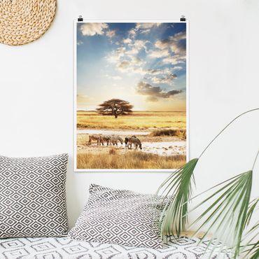 Poster - Das Leben der Zebras - Hochformat 3:4