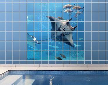 Fliesenbild - Manta Ray