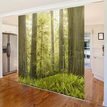 Schiebegardinen Set - Redwood State Park Waldblick - Flächenvorhänge