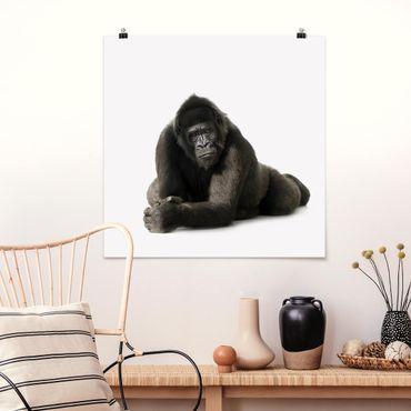 Poster - Liegender Gorilla II - Quadrat 1:1