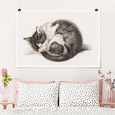 Poster - Vintage Zeichnung Katze II - Querformat 2:3