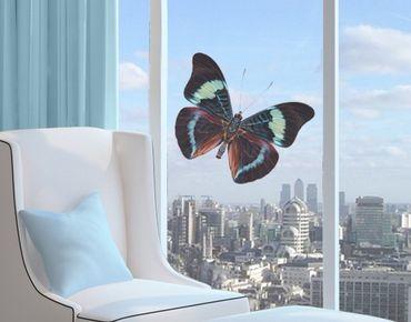 Fensterfolie - Fenstersticker No.423 Lepidoptera - Fensterbilder