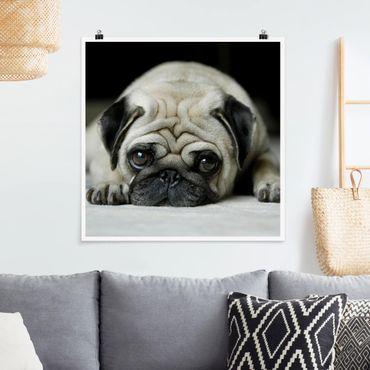 Poster - Pug Loves You - Quadrat 1:1