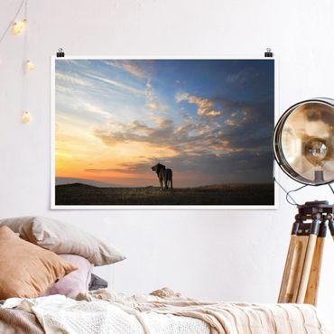 Poster - Löwe im Sonnenuntergang - Querformat 2:3
