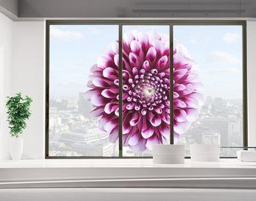Fensterfolie - Sichtschutz Fenster Aster - Fensterbilder
