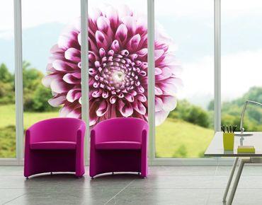 Fensterfolie - Fenstersticker No.431 Aster - Fensterbilder