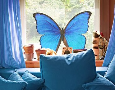 Fensterfolie - Sichtschutz Fenster Blauer Morphofalter - Fensterbilder