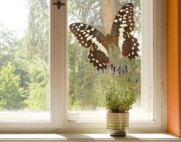 Fensterfolie - Fenstersticker No.447 Edelfalter in Erdtönen - Fensterbilder