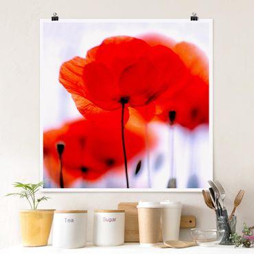 Poster - Magic Poppies - Quadrat 1:1