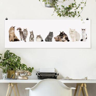 Poster - Katzenbande - Panorama Querformat