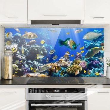 Spritzschutz Glas - Underwater Reef - Querformat - 2:1