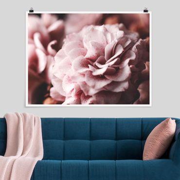 Poster - Shabby Rosa Rose Pastell - Querformat 3:4