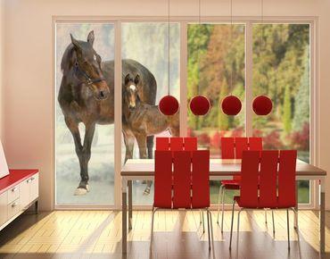 Fensterfolie - XXL Fensterbild Trakehnerstute & Fohlen - Fenster Sichtschutz