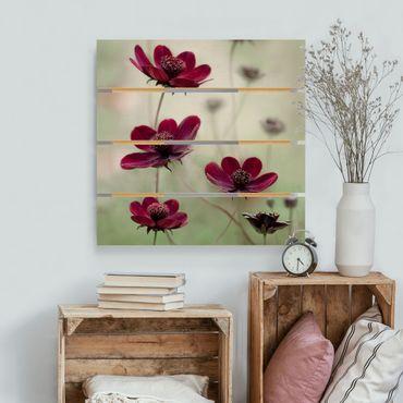 Holzbild - Pinke Kosmeen - Quadrat 1:1