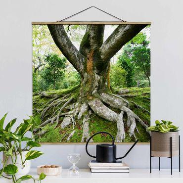 Stoffbild mit Posterleisten - Alter Baum - Quadrat 1:1