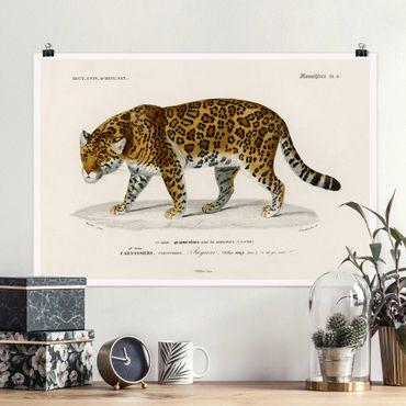 Poster - Vintage Lehrtafel Jaguar - Querformat 2:3