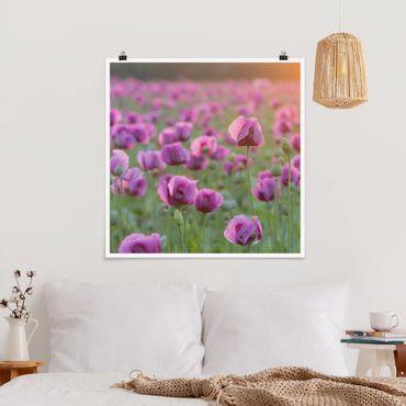 Poster - Violette Schlafmohn Blumenwiese im Frühling - Quadrat 1:1