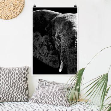 Poster - Afrikanischer Elefant schwarz-weiß - Hochformat 3:2