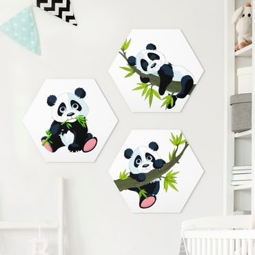 Hexagon Bild Forex 3-teilig - Pandabären Set