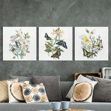 Leinwandbild 3-teilig - Britische Schmetterlinge Set I - Quadrate 1:1