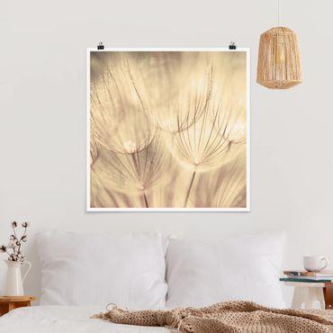 Poster - Pusteblumen Nahaufnahme in wohnlicher Sepia Tönung - Quadrat 1:1