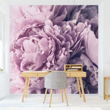 Fototapete - Lila Pfingstrosenblüten
