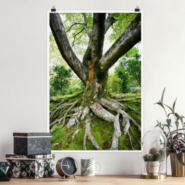 Poster - Alter Baum - Hochformat 3:2